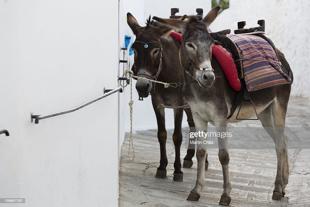 two donkeys tethered in the street in Lindos : Stock Photo