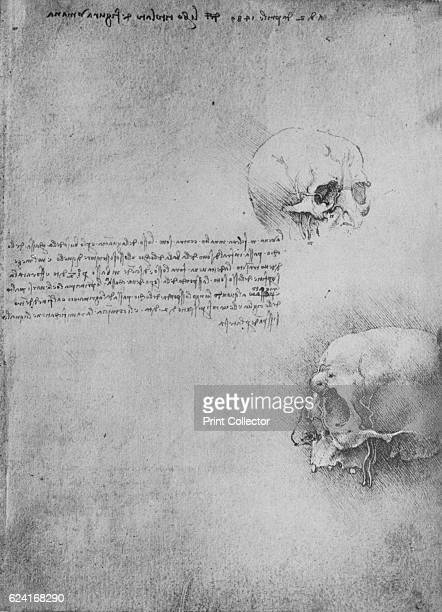 Two Drawings of the Bony Structure of the Head' c1480 From The Drawings of Leonardo da Vinci [Reynal Hitchcock New York 1945] Artist Leonardo da Vinci