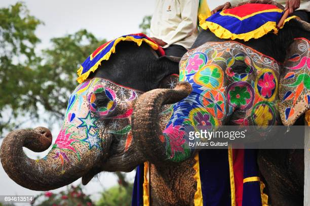 Two elephants displaying their trunks at the Elephant Festival in Jaipur Elephant Festival, Rajasthan, India