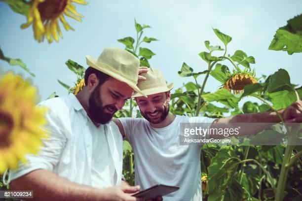 Deux gîtes travailleurs examinant le champ de tournesols sur tablette numérique