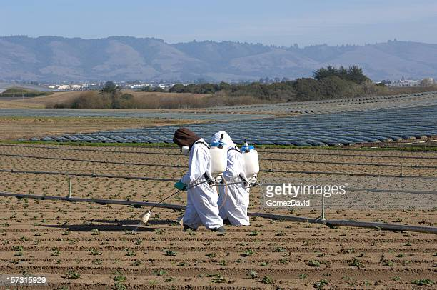 Two Farm Workers in Protective Clothing Spraying Plant Seedlings
