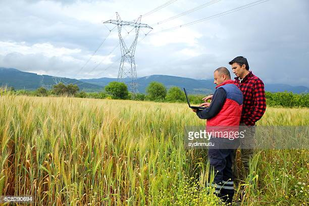 Two Farmer with laptop in wheat field