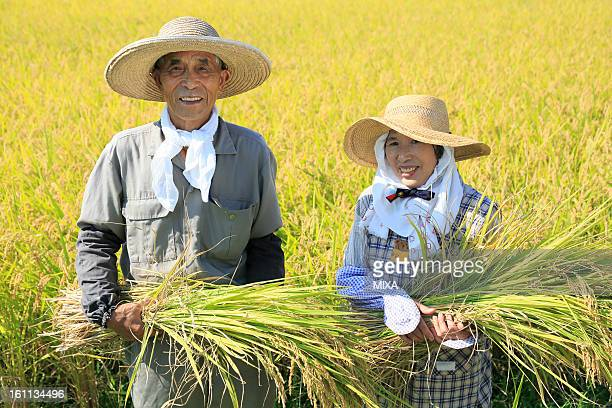 Two Farmers Holding Rice Ear and Standing in Rice Paddy in Autumn