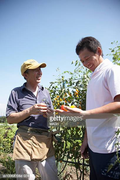 Two farmers holding tomato in field, low angle view