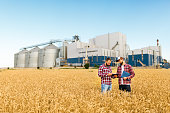 Two farmers are standing in a wheat field with tablet. Agronomists discuss harvest among ears of wheat with grain terminal on background
