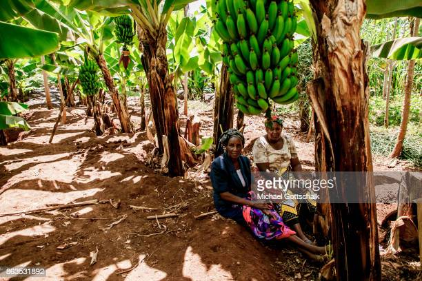 Two female farmers next to a banana plant on the field of a farm on which plants grow with the support of the irrigation system of local farming...