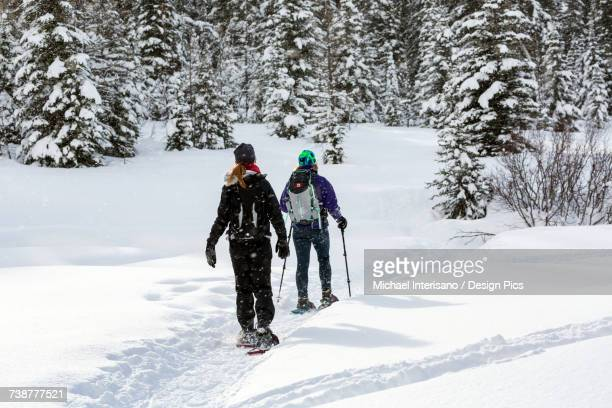 Two female snowshoers on a snow covered trail around snow covered evergreen trees