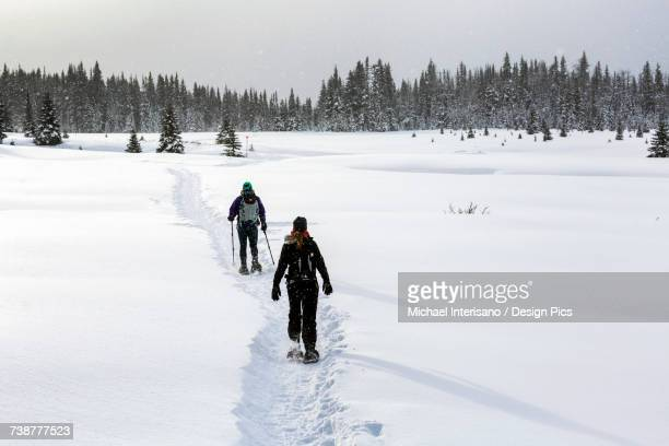 Two female snowshoers on a snow covered trail in an open meadow with snow covered evergreen trees