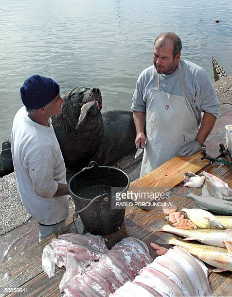 Two fishmongers chat whilst a sea lion gulps down his snack 10 August 2005 on the fishermen's pier of the port of Punta del Este 140 km east of...