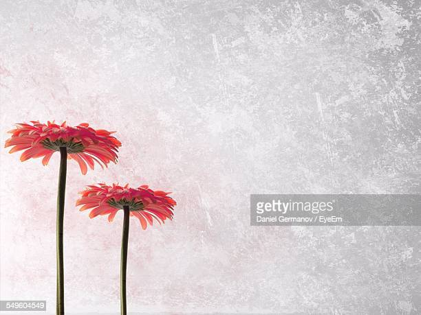 Two Flowers Against Frosted Glass