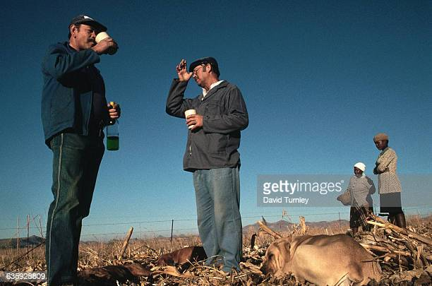 Two Free State farmers drink beverages brought by domestic servants The farmers take a break from supervising the corn harvest