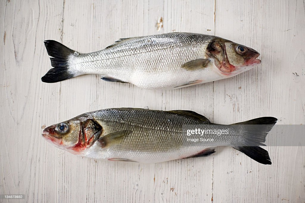 Two fresh salmons : Stock Photo