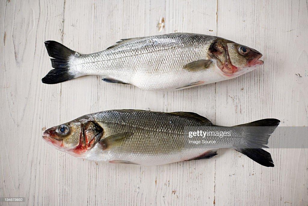 Two fresh salmons