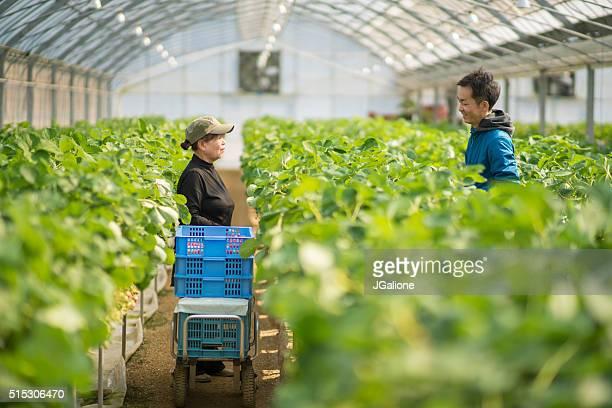 Zwei Generationen von Bauern sprechen