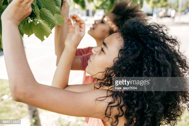 Two girl  discovering leaf structure