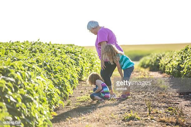 Zwei Mädchen & Oma In Trail zwischen zwei Sojabohne Felder