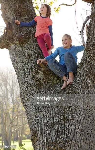 Two girls playing up a tree