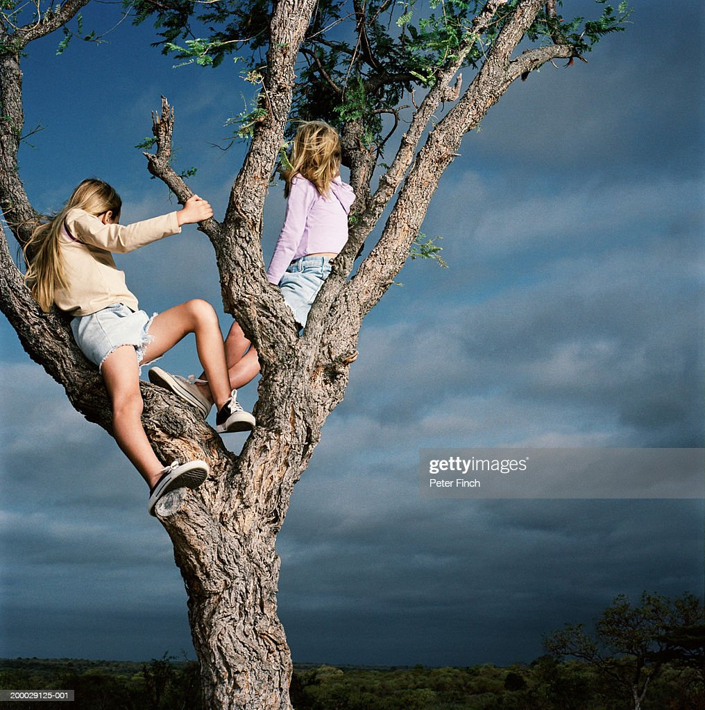 Two girls (7-9) sitting in tree, rear view : Stock Photo