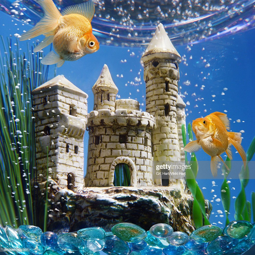 Two goldfish in bowl with castle closeup stock photo for Fish tank images