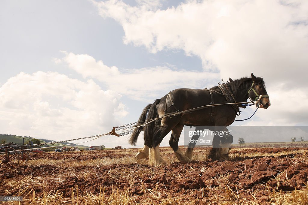 two heavy horses pulling plough : Stock Photo