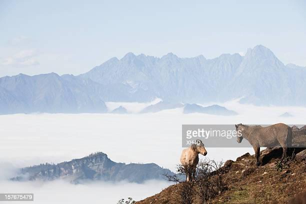 Dois cavalos no mar de nuvens