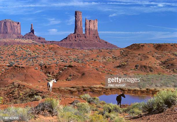 Two horses at a water hole in Monument Valley Equus caballus Monument Valley straddles the ArizonaUtah border Monument Valley Navajo Tribal Park...