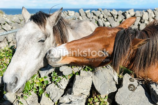 Two Horses Kissing Meaning Of Love Stock Photo - Thinkstock