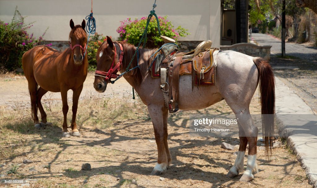 Two horses ready for 'rental' on a street corner in a small village : Stock Photo