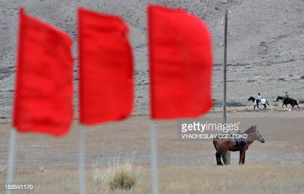 Two horses stand in a field during the hunting festival 'Salburun' in the village of Bokonbayevo some 300 km outside Kyrgyzstan's capital Bishkek on...