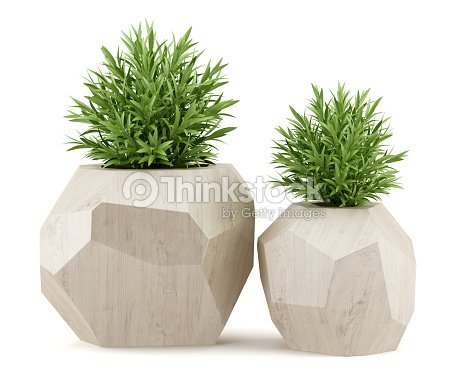 two houseplants in wooden pots isolated on white background : Stock Photo