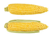 Two husked cobs of sweet corn, also sugar corn. Fresh vegetable with high sugar content. Immature harvested, in milk stage. Zea mays. Isolated, food photo, close up, from above, on white background.