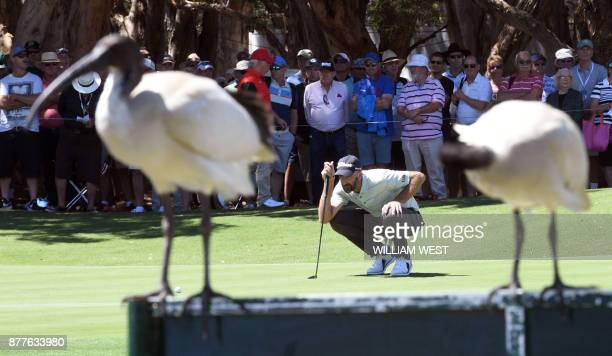 Two Ibis birds look on as Geoff Ogilvy of Australia lines up a putt during the first round of the Australian Open at the Australian Golf Club course...
