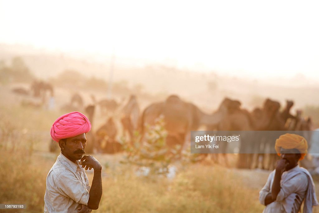 Two Indian herders stand near their camels during the Pushkar camel fair on November 21, 2012 in Pushkar, India. The annual camel and livestock fair is held over five days, and attracts thousands of tourists.