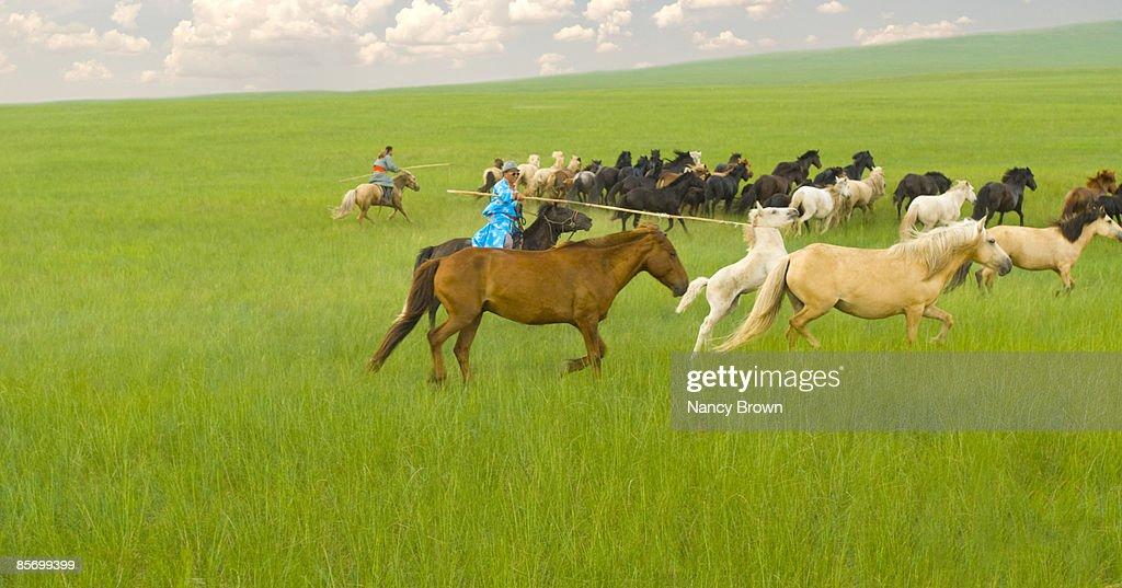 Two Inner Mongolia Horsemen catching horses with u