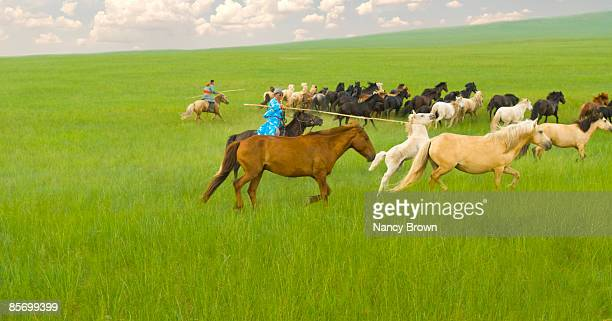 Two Inner Mongolia Horsemen catching horses with u