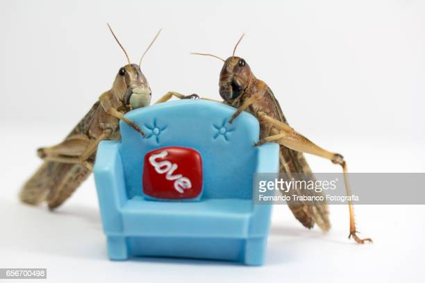 Two insects in love on a sofa