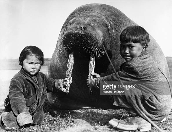 Two Inuit boys hold the tusks of a dead walrus brought in by hunters