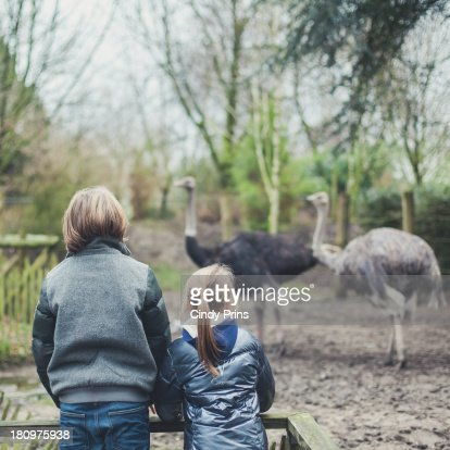 Two kids behind a fence watching ostriches