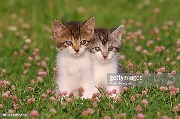 Two kittens in meadow