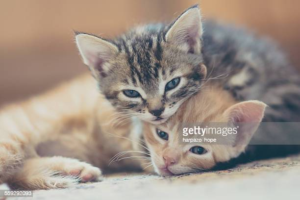 Two kittens looking at the camera.