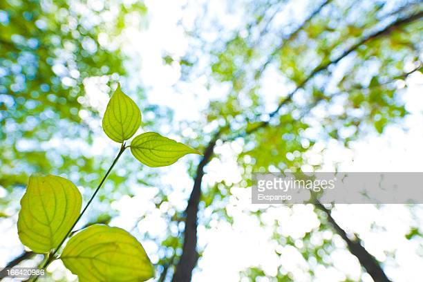 Two Leaves of Young Tree Reaching for the Sky
