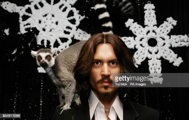 Two Lemurs of the kind featured in the animated film Madagascar 2 visit the celebrity waxworks including Johnny Depp at Madame Tussauds in central...