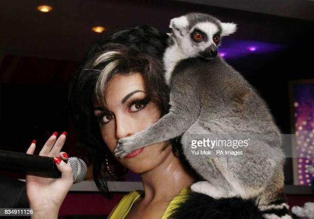 Two Lemurs of the kind featured in the animated film Madagascar 2 visit the celebrity waxworks including Amy Winehouse at Madame Tussauds in central...