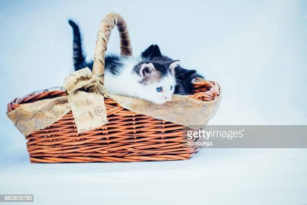 Two little kittens in the basket