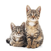 Two little kittens isolated on white background.
