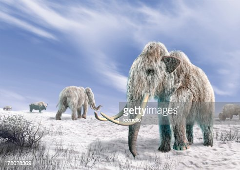 Two mammoth in a field covered with snow. : Stock Photo