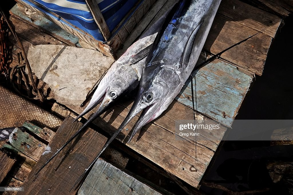 Two marlin caught by fishermen sit on a dock November 16, 2012 in Havana, Cuba. Despite Cuba's fisheries being at critically low levels according to the United Nations, fishermen are still catching enough to make a living.