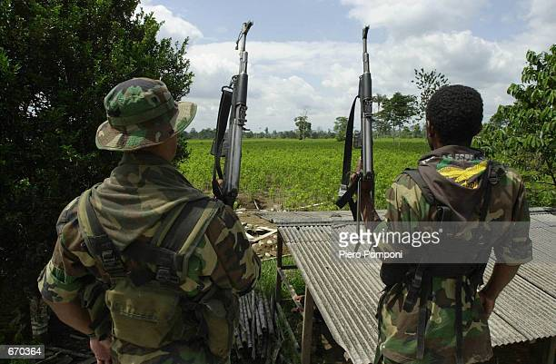 Two members of the AUC the United Self Defense Force of Colombia the extreme right paramilitary group patrol a coca leaf plantation where a manual...