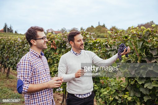 Two men in a vineyard checking grapes