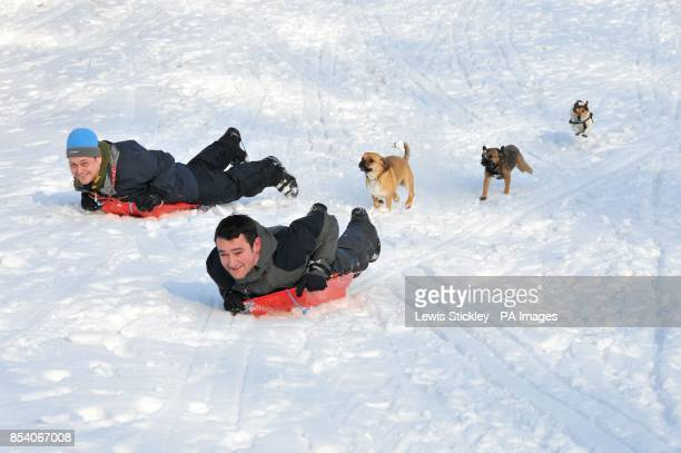 Two men on sledges are chased by their dogs down a hill in Woodthorpe Grange Park as a fresh fall of snow fell overnight in the Nottingham area